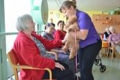 Obisk terapevtskih psov iz zavoda PET